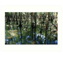 Daintree Rainforest Art Print