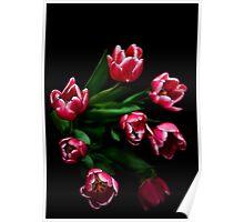 Cerise Tulips on Black Poster