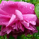 After The Rain Shower by MaeBelle