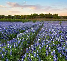 Texas Bluebonnet Trail 4 by RobGreebonPhoto