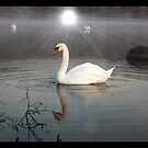 Morning,Banton Loch,Kilsyth,Scotland by Jim Wilson