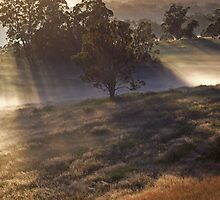 'Morning amongst the Mist' by debsphotos