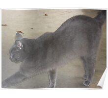 Cat Tricks - Pushups Poster