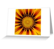 orange yellow daisy Greeting Card