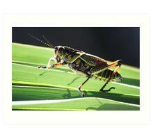 Pretty Grass Hopper Art Print