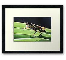 Pretty Grass Hopper Framed Print