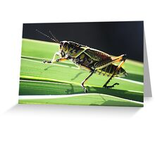 Pretty Grass Hopper Greeting Card