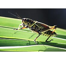 Pretty Grass Hopper Photographic Print