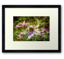 Echinacea - textured Framed Print