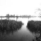 Lake Seminole 2  by WTBird