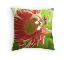 Flippant Gerbera Throw Pillow