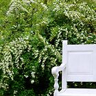 A Nice Place to Sit     ^ by flowers2love