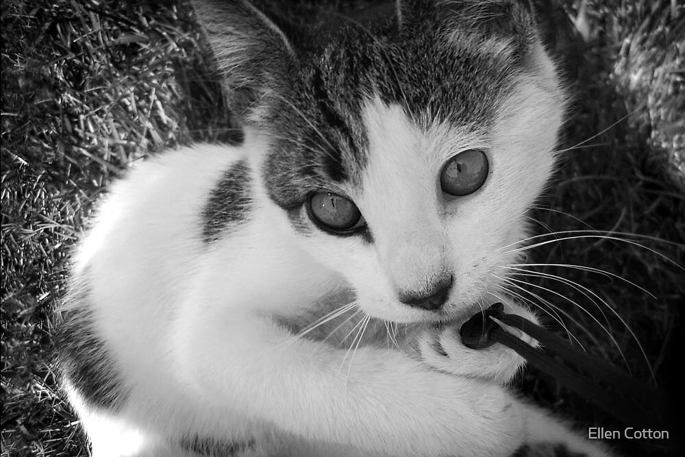 Kandid Kitty by Ellen Cotton
