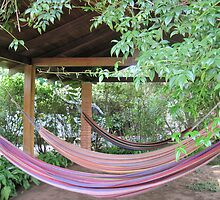Hammocks--Costa Rica by Erica Lipper