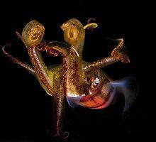 squid  by aquapix