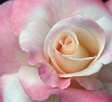 Soft and Pink by Monnie Ryan