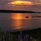 Lupins at Sunset, Yarmouth by Debbie  Roberts