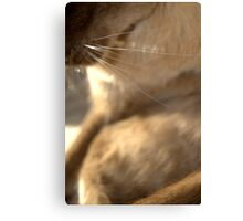 whiskers  © 2010 patricia vannucci  Canvas Print