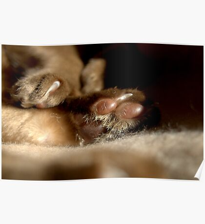 paws & claws © 2010 patricia vannucci  Poster