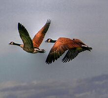 Canada Geese In Flight by Larry Trupp