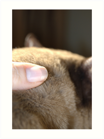 the touch of his fur © 2010 patricia vannucci by PERUGINA