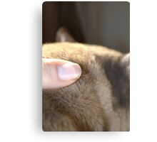 the touch of his fur © 2010 patricia vannucci Metal Print