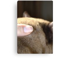 the touch of his fur © 2010 patricia vannucci Canvas Print
