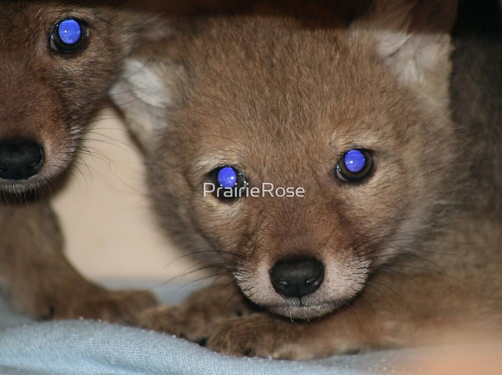 Coyote Pups by PrairieRose