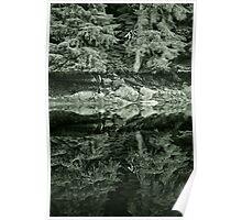 Reflecting Rainforest Poster
