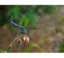 Blue Suede Dragon Photographic Print