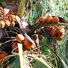 Coconut Bunches by Garrett Morlang