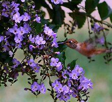 Taste of Spring Bloom by saseoche