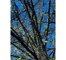 Susan Creek Indian Mounds Tree Photographic Print