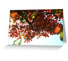 About to Fall-Urban Nature Greeting Card