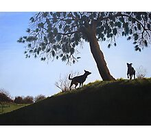 Dogs in park snow landscape painting realist art   Photographic Print