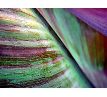 Canna lily foliage abstract Photographic Print