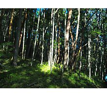 The magical Forest Photographic Print