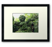 Cupid topiary Framed Print