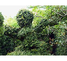 Cupid topiary Photographic Print