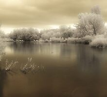 Tranquility by Ilcho Trajkovski