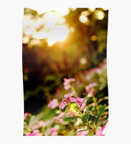 Sunbathing - Botanical Gardens, Ho Chi Minh City, Vietnam Poster