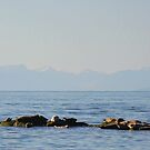 seals  by TerrillWelch