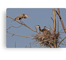 Great Blue Heron And Chicks Canvas Print
