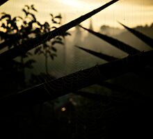 Sunrise seen through the cobweb in Dalat city, Vietnam by MadsMonsen