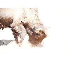 Raging Bison Photographic Print