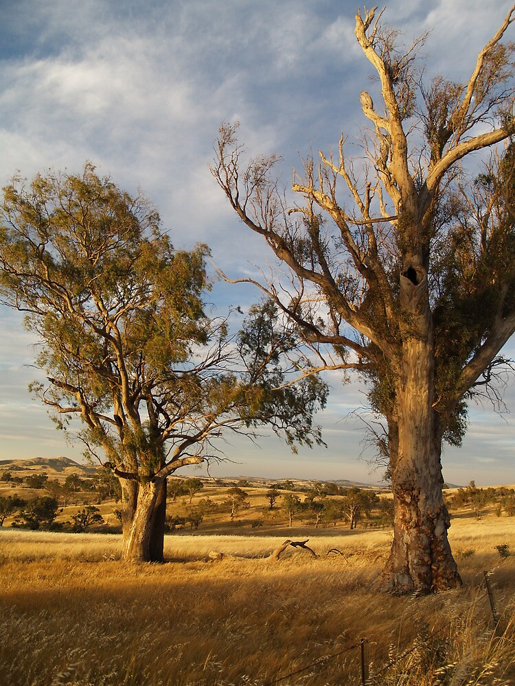 Dry and Beautiful in Canberra - Australia by shortshooter-Al