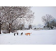 dog snow scene landscape with trees & rooftops art Photographic Print
