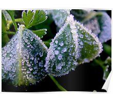 Icy Garden Poster