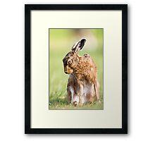 Summer Hare Framed Print