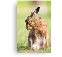 Summer Hare Canvas Print